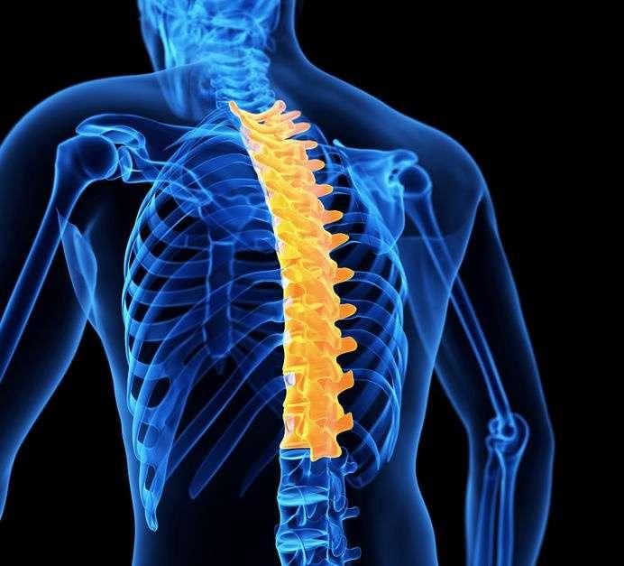 Escápulas y movilidad articular