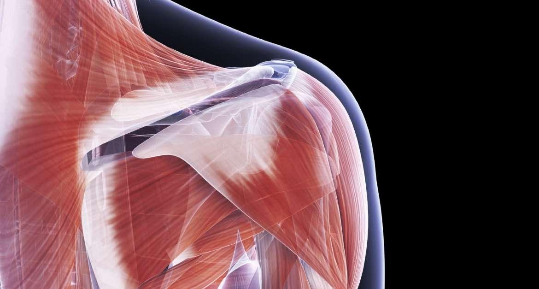 Rotación externa del hombro