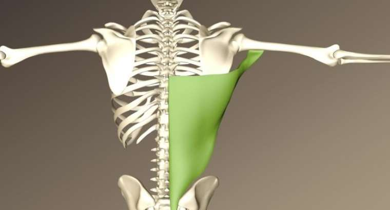 Estiramiento dorsal ancho