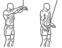 triceps braquial