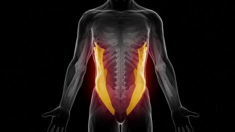 Anatomía del crunch abdominal